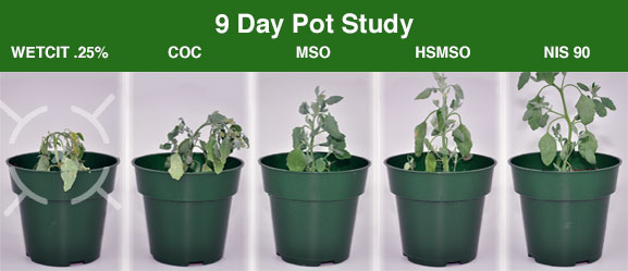 WETCIT 9 Day Pot Herbicide Study